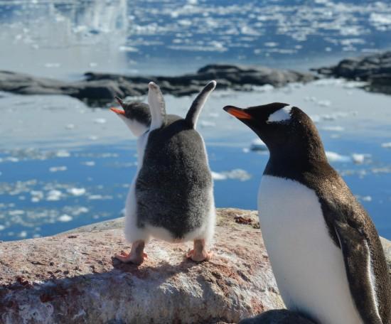 823624 10152565045550232 1371136272 o 550x456 Antarctic Adventure Honeymoon