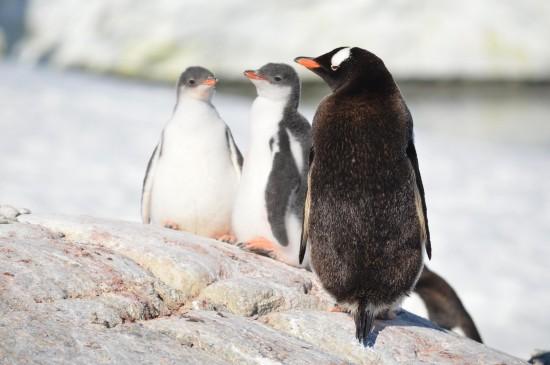 830285 10152589498380232 1278288273 o 550x365 Antarctic Adventure Honeymoon