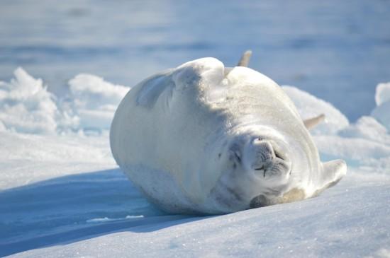 843060 10152565040860232 245526419 o 550x365 Antarctic Adventure Honeymoon