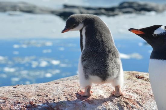 843109 10152565048620232 1160938004 o 550x365 Antarctic Adventure Honeymoon
