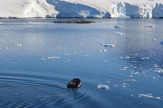 858137 10152589545805232 1402287093 o 550x365 Antarctic Adventure Honeymoon
