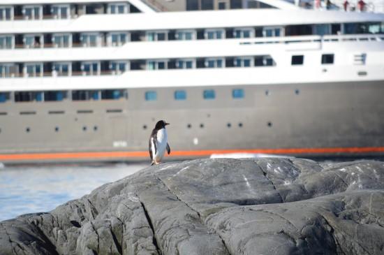 858137 10152589545810232 1360861696 o 550x365 Antarctic Adventure Honeymoon