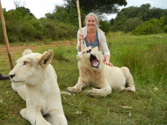 03 11 550x412 My Big Five of South Africa Top Five Places To Visit In South Africa