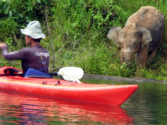 AdventureHoney Guide on our 3 day kayak in Khao Sok 550x412 An Adventure To Remember For Your Honeymoon