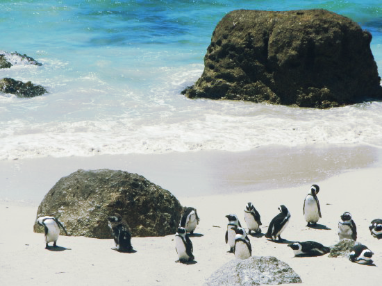 Boulders Beach Penguins South Africa My Big Five of South Africa Top Five Places To Visit In South Africa