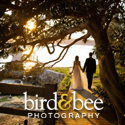 Bird & Bee Studio Weddings banner