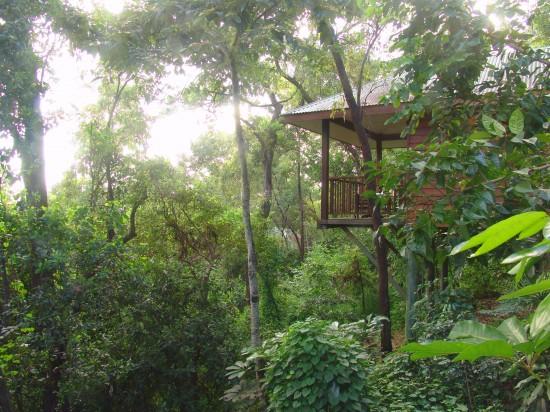 Thala Beach Lodge Eucalypt Bungalow canopy