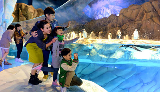 Ocean Park Discover HK 5 Things to Do on Your Hong Kong Honeymoon or Stopover