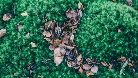 Queenstown New Zealand 18 550x309 Autumn Adventures In Queenstown New Zealand