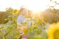 sunflower field engagement001