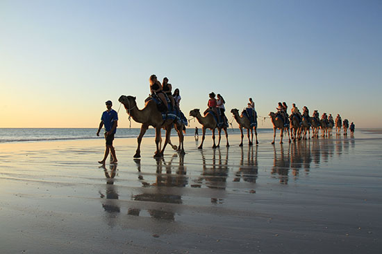 Broome Camels0003