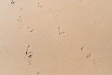 eco beach experiences