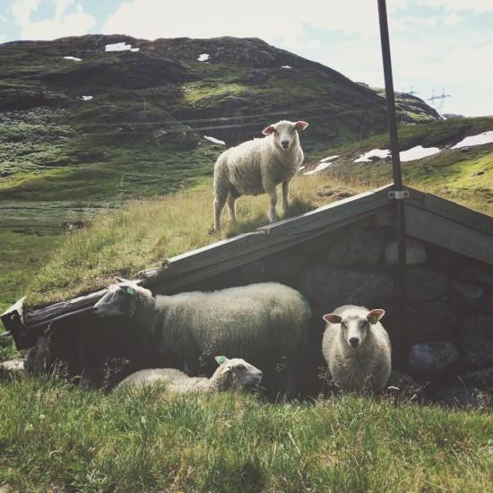 norway3 550x550 Scandinavian Campervan Adventure