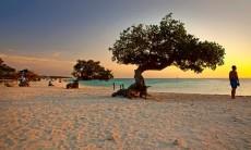palm-eagle-beach