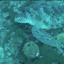 Scuba diving in the Gili islands 550x330 125x125 Friday Roundup