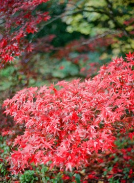autumn in the dandenons