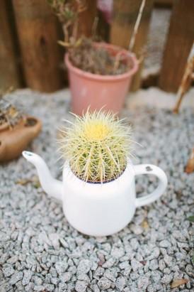cactus in teapot