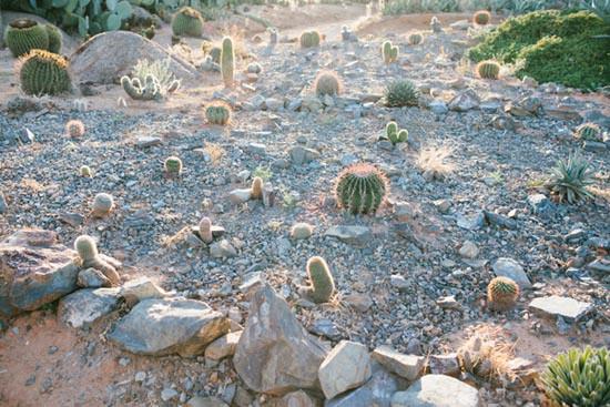 shepparton cactus garden