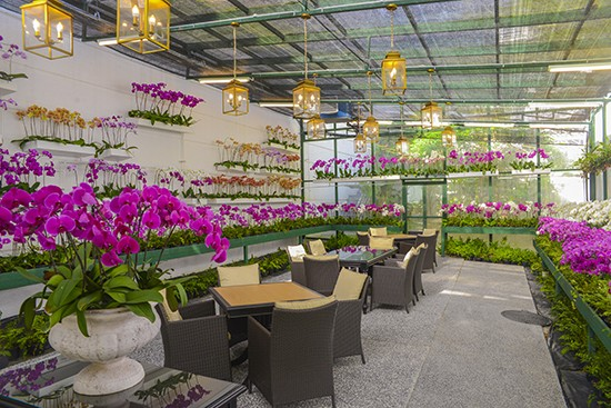 Majestic Kl Orchid Room