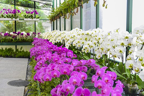 Majestic Orchid Room