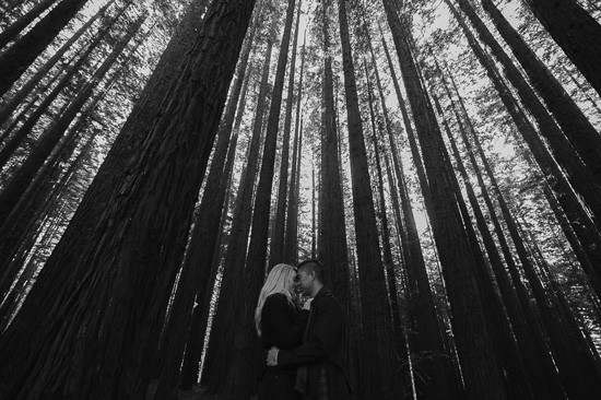 Winter forest engagement0049