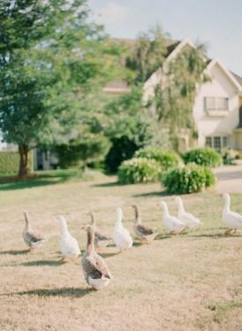 Geese at Summerfields