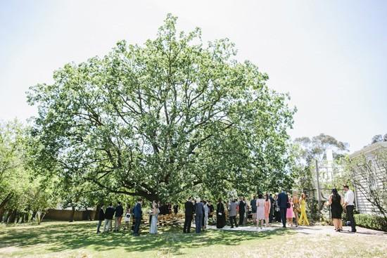 Oak tree at Heidi