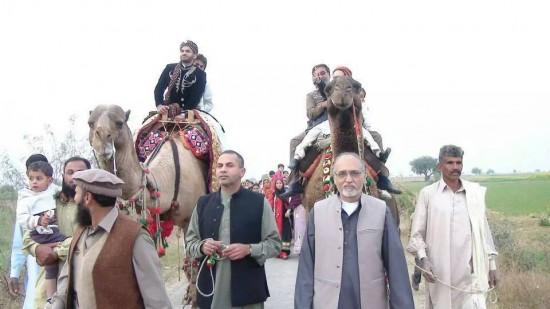 Camel moe