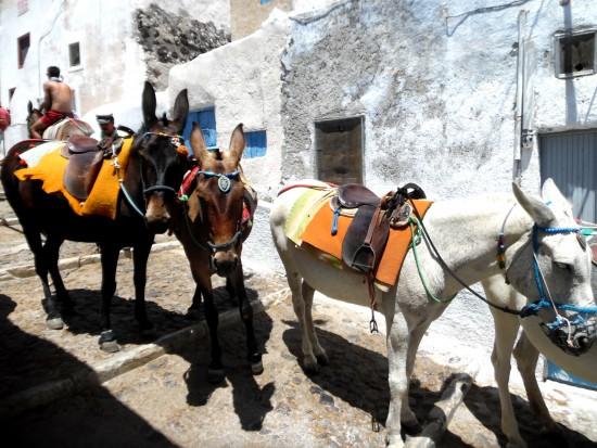 Donkeys 5.7.15 Santorini