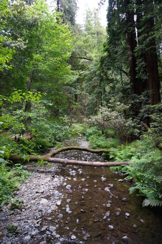 Muir Woods stream