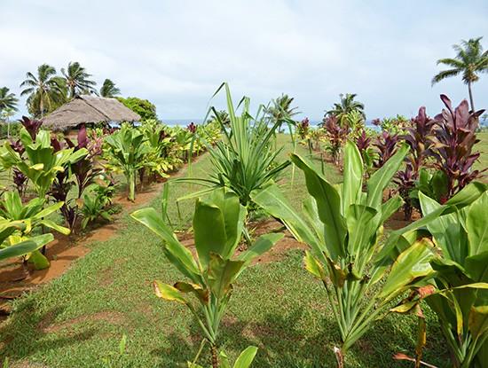 Punarei Aitutaki Gardens
