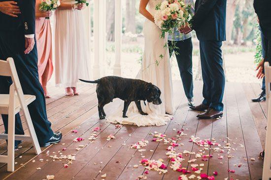 Romantic Gabbinbar Homestead Wedding031
