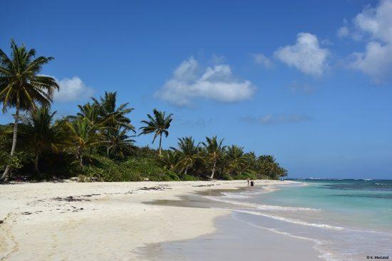 culebra-puerto-rico