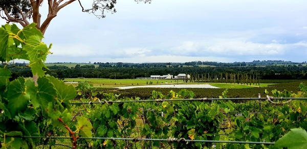 A view of a vinyard across from the accommodation