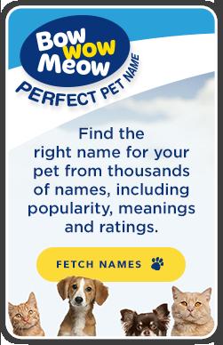 Perfect Pet Name