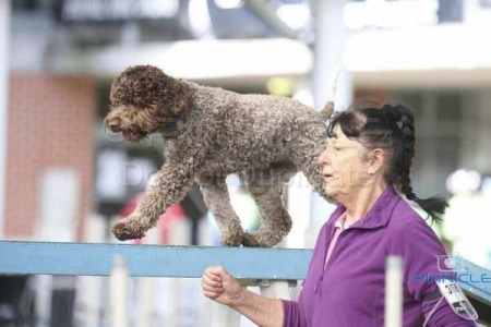 Sydney Royal Agility - 7th April 2015