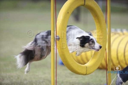 BCC NSW Agility Trial - 12th April 2015