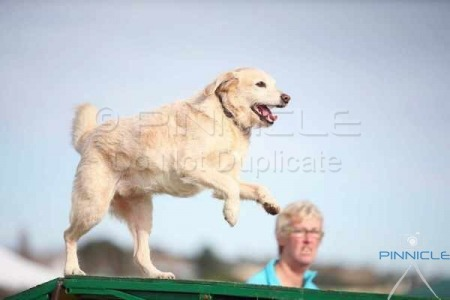 Goulburn Kennel & Dog Training Club - 30 May 2015 - Agility