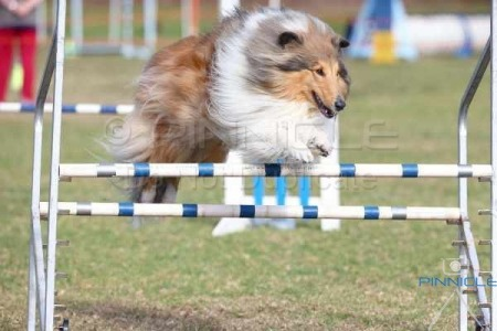 Sutherland Shire DTC Inc - 14th June 2015 - Agility