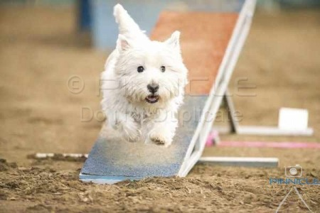 HDAC Winter Agility & Jumping Trial at SIEC - 1st August 2015