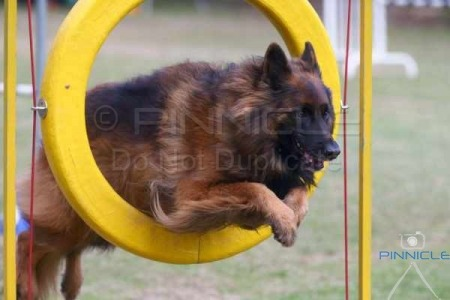 Northern Suburbs DTC Inc 17th Agility trial -  2nd August 2015