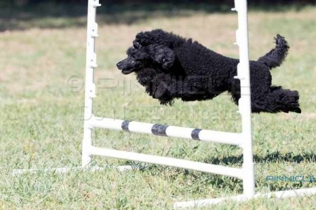 ACT Companion Dog Club - Agility, Jumping & Games - 7th Nov 2015