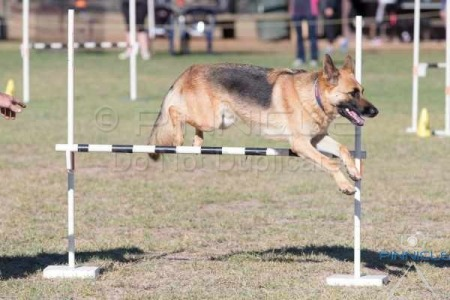 Kyeamba Kennel & Training Club Inc - 23rd April 2016