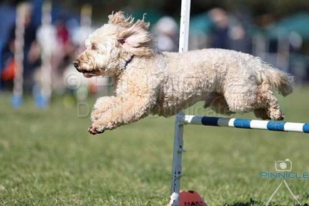 Manly Agility - 2 July 2016