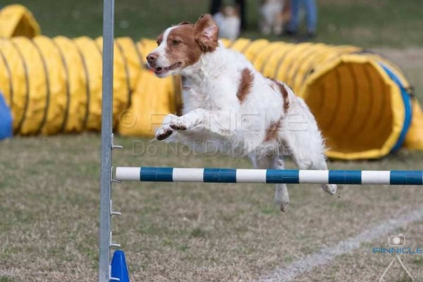 Sutherland Shire DTC - Agility - 18 June 2017