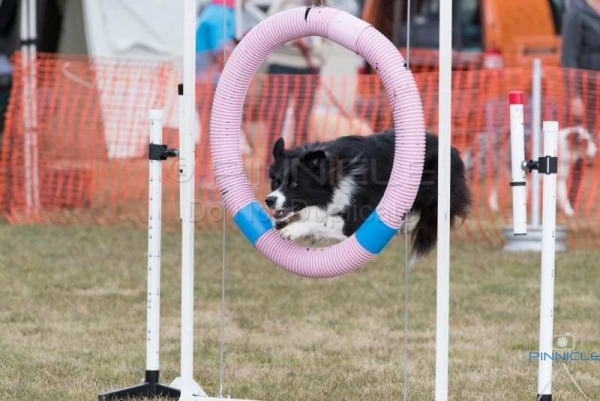 EPIC Extravaganza Agility - 8 & 9 July 2017