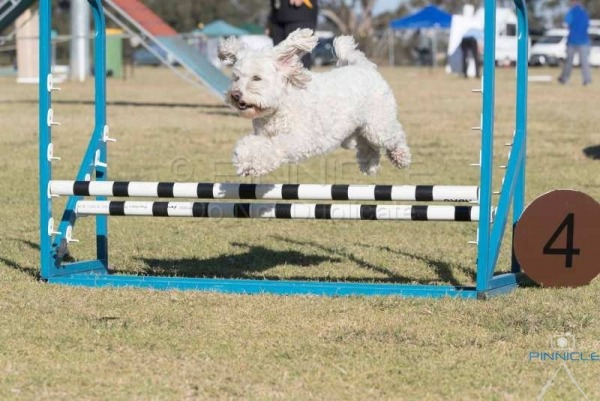 Festival of Agility - 9, 10 Sept 2017