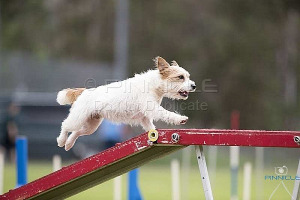 Agility - ADAA - Douglas Park NSW - 31st March 2018