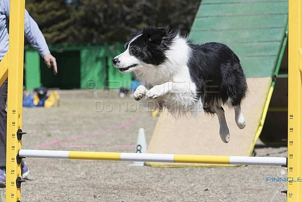 Agility - ANKC - Southern District BCC Berrima - 16 Sep 18