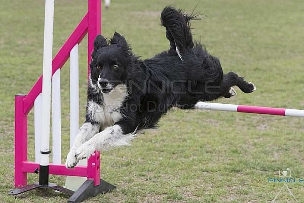 Agility - ANKC - BCC of NSW - 6 Oct 18